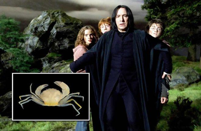 carangueijo harry potter