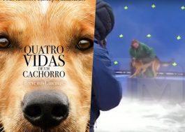 """Vídeo do set de """"Quatro Vidas de Um Cachorro"""" mostra maus-tratos a pastor alemão"""