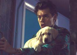 Novo clipe do Harry Styles tem guerra de comida entre crianças e cachorros fofinhos