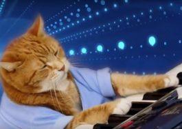 O Keyboard Cat morreu! :(