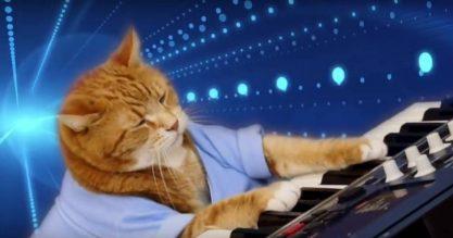 O Keyboard Cat morreu