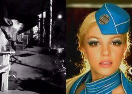 """Esse cachorro viralizou cantando """"Toxic"""" da Britney e a gente tá morrendo"""