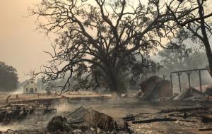 O set de Westworld é destruído em incêndio na Califórnia