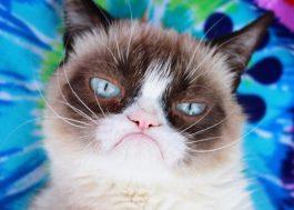 Grumpy Cat, a gatinha 'rabugenta', morre aos 7 anos de idade :(