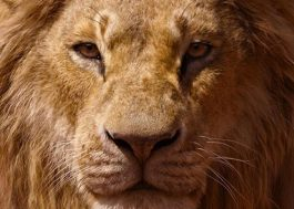 """Socorro! Saiu mais um teaser lindo de """"O Rei Leão"""""""