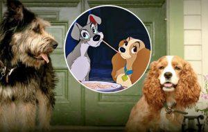 """Foram reveladas as fotos dos cachorros que farão o live action de """"A Dama e o Vagabundo""""; veja!"""