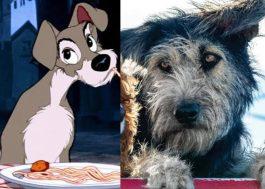 """Cão protagonista de """"A Dama e o Vagabundo"""" foi adotado em abrigo"""