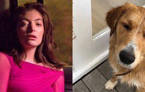 Lorde anuncia pausa na produção de novo álbum após morte de seu pet :(