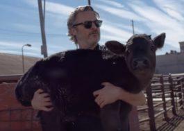 Um dia após vencer o Oscar, Joaquin Phoenix resgata vaca e bezerro de matadouro