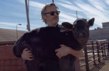 Joaquin Phoenix resgata bezerro